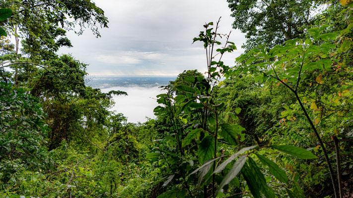 La forêt tropicale...
