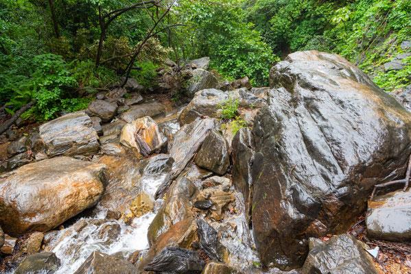 Rivière en forêt tropicale.