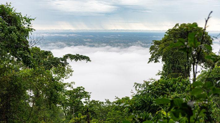 La forêt tropicale des Uzungwa