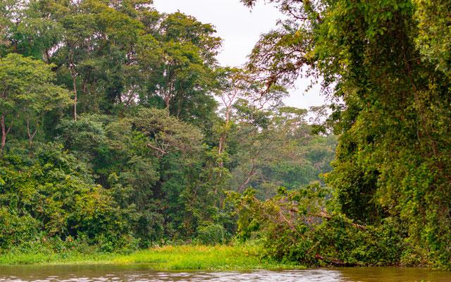 Ambiance amazonienne du parc national de Tortuguero