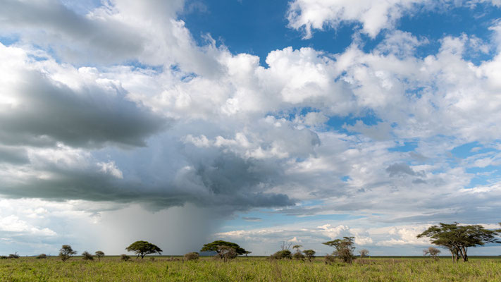 Typical landscape of the Serengeti savannah