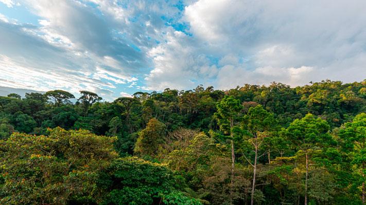 El-Copal forest