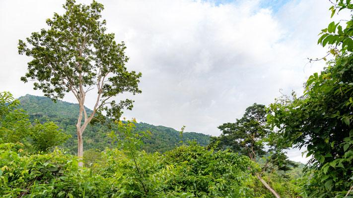 Udzungwas landscape