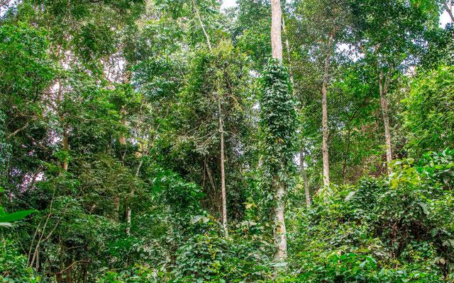 Forêt aux environs de la Royal Mile