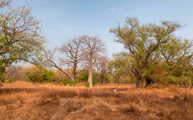 Forêt de Soucouta