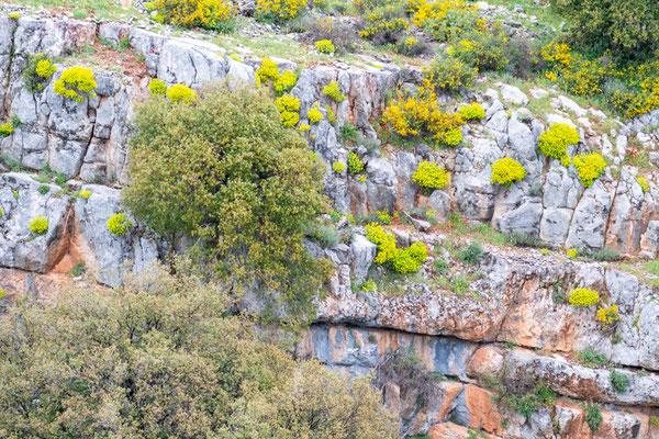 Falaises proche de Aammiq, milieu du Daman des rochers.