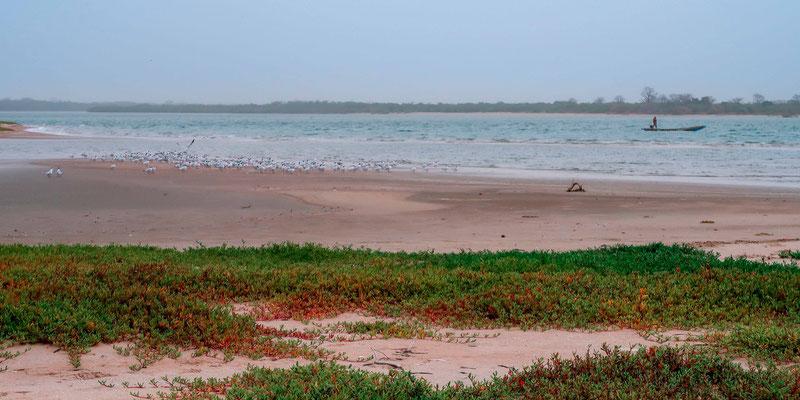 L' île aux Oiseaux. Delta su Saloum.