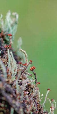 Les lichens trouve leur bonheur sur une barrière à vache