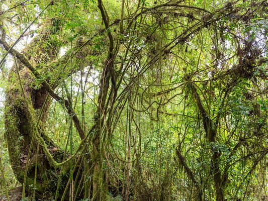 Harenna Forest atmosphere