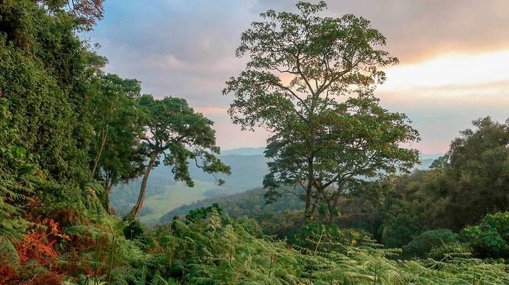 Encore un peu de magie des paysages de ces forêts.