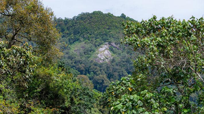 A beautiful Uluguru forest still well preserved
