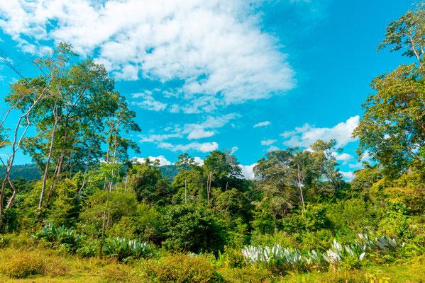 Paysage autour de Selva Bananito