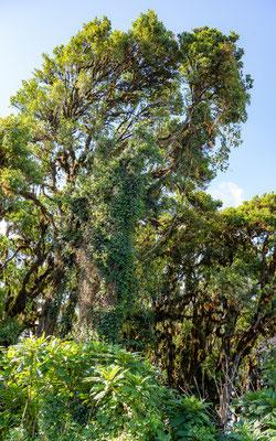 N'gorongoro highland forest
