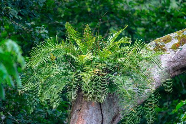 Forêt de Kibale