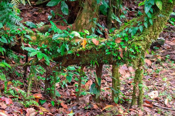 Epiphyte plant diversity