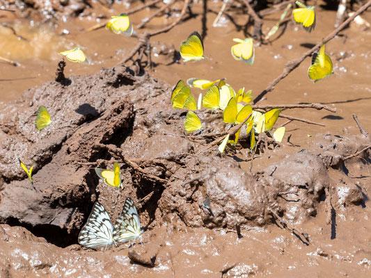 Undefined butterflies