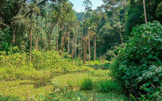 """The Bwindi Forest on the plain side called """"the Neck"""". Beautiful!"""