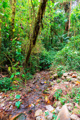 Forêt de San Gerardo