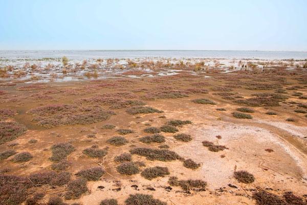 Djoudj NP landscape