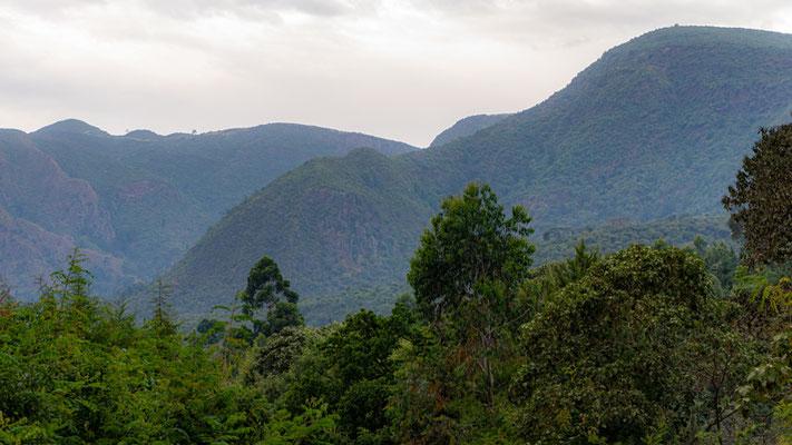 Wondo Genet forest