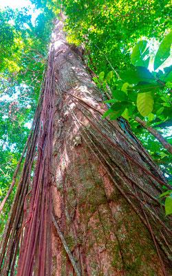 Architecture arboricole