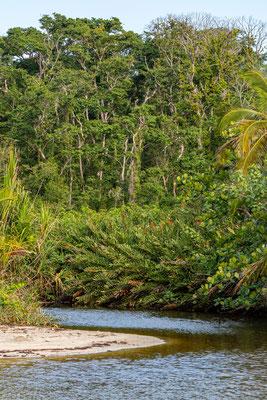 L'un des ruisseaux du Parc national.