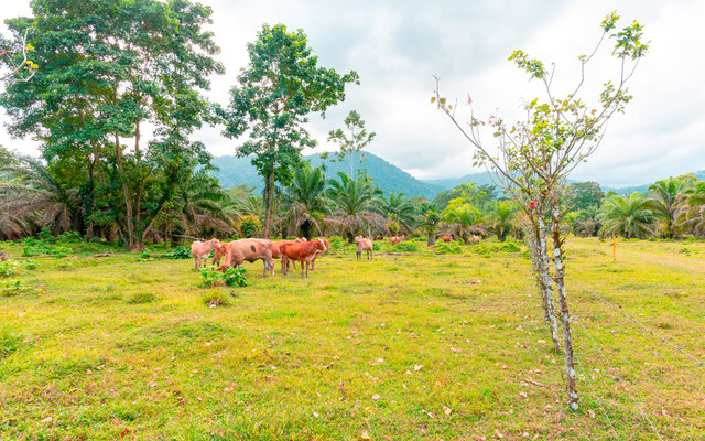 Varied environments typical of Selva Bananito