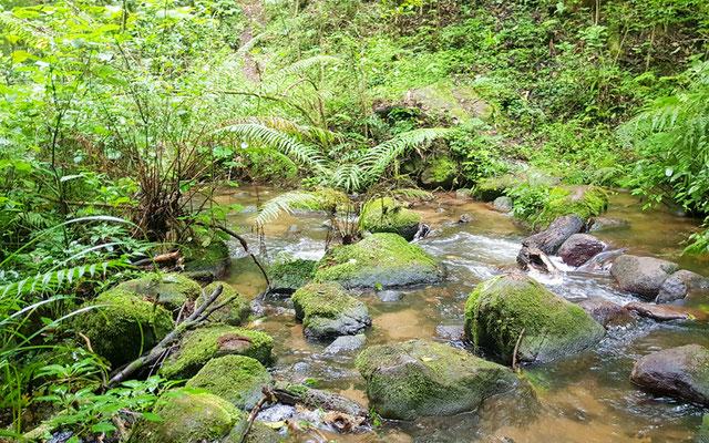 River in the Kilombero reserve