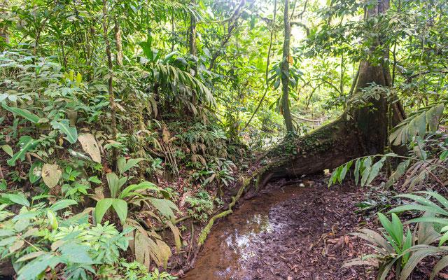 Forêt de La Selva