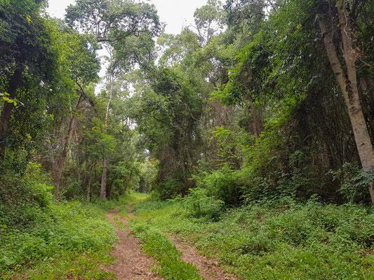 Foret secondaire autour du Kiboko lodge, vers Arusha. Petite halte avant de prendre la route pour Le Serengeti