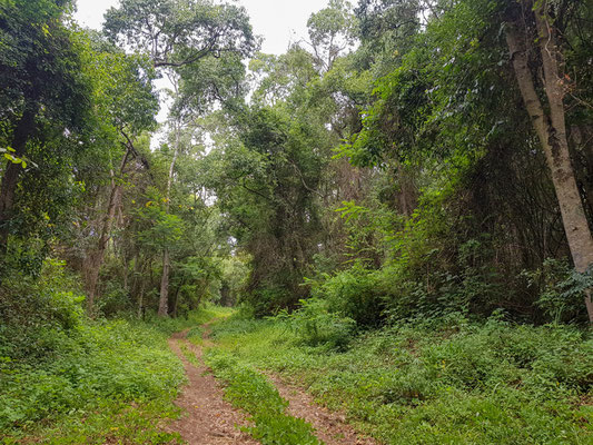 Forêt secondaire autour du Kiboko lodge, vers Arusha. Petite halte avant de prendre la route pour le PN du Serengeti