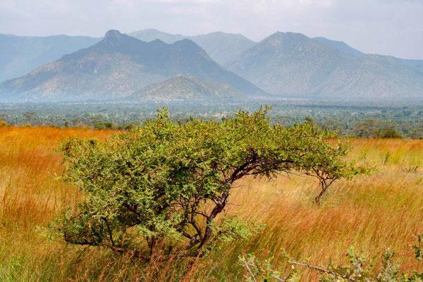 Kidepo NP landscape