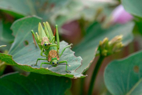 Undefined grasshopper