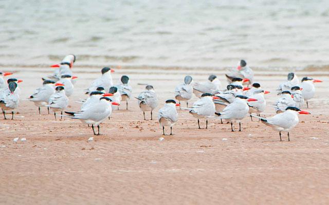 L' île aux Oiseaux ( Birds island). Saloum Delta NP