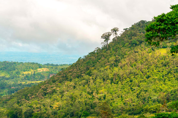 View from Heliconia lodge