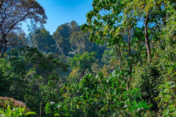Paysage de l'extraordinaire forêt des Bwindis