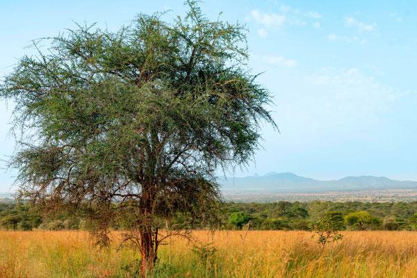 Savannah in Kidepo valley