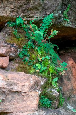 Bel écosystème sur un bout de rocher