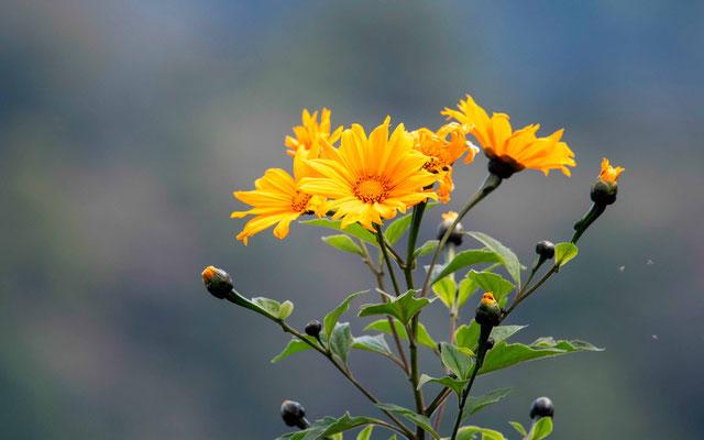 Fleur indet.