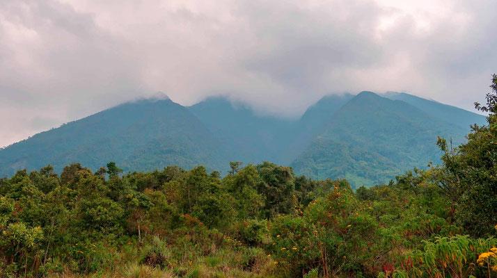 Virungas mountains