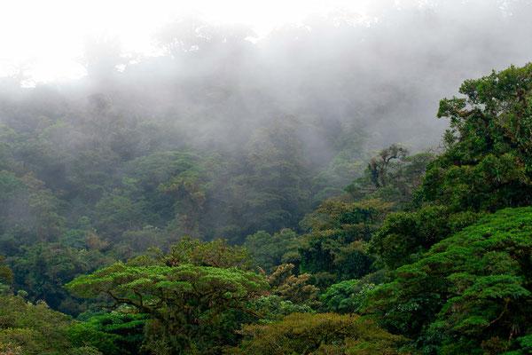 Vue de la forêt primaire du Cerro Chato