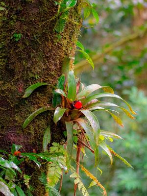 Plante épiphyte