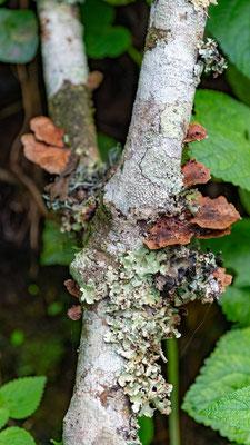 Undefined Lichen