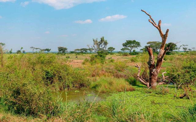 Wetland at Queen Elizabeth NP