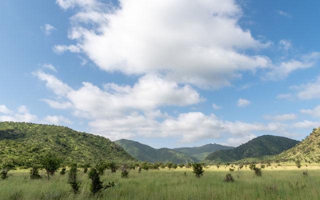 Paysages du Parc national de Mkomazi.