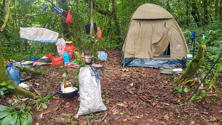 Camp de base au cœur de la forêt! Que du bonheur! Mais quelle expédition et logistique nécessaire.