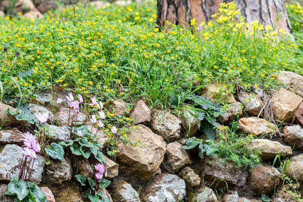 Vieux mur végétalisé