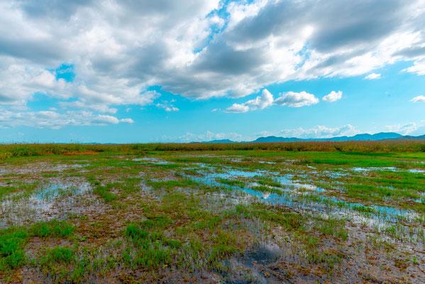Rancho Humo wetland