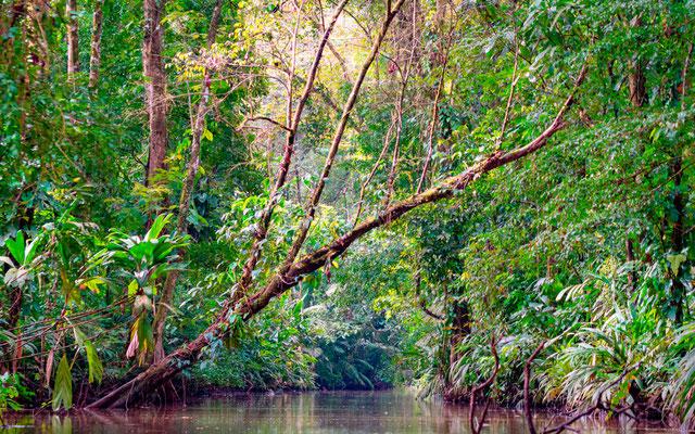 Amazonian atmosphere of Tortuguero National Park
