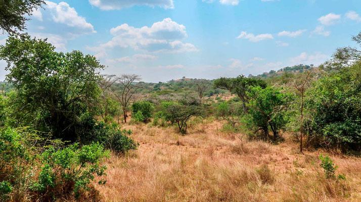 Milieu typique du parc, la savane arborée.